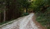 Strada forestale presso Pian della Casaretta